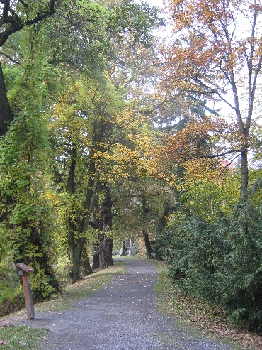 Pathway with Autumnal colours © Ricky Yates
