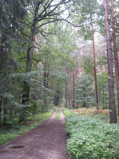Path through the forests near Hochstein © Ricky Yates