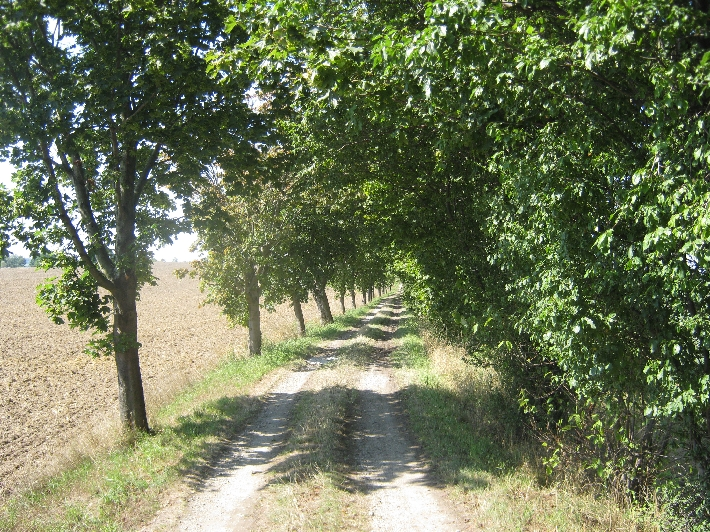 Pilgerweg with shade © Ricky Yates